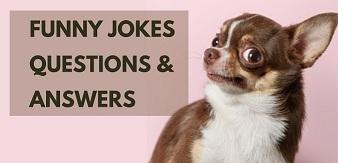 Funny jokes questions